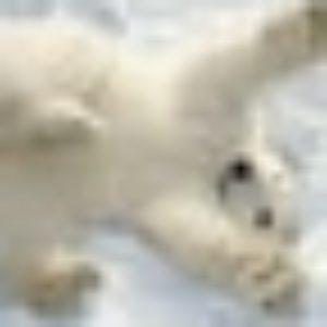 Photo de profil de petitmoineau