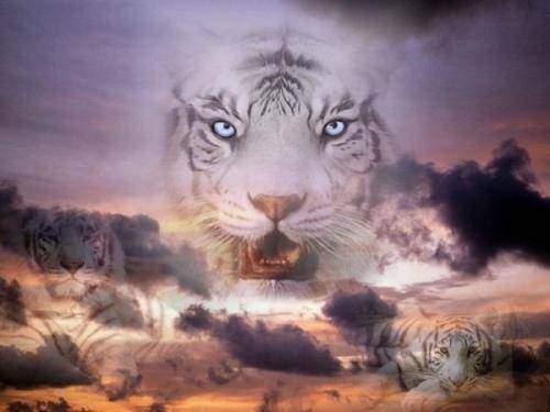 Photo de profil de tigre069